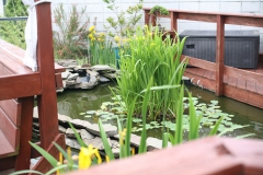 Rooftop Pond Plants