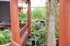 Rooftop Plants