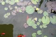 Rooftop Koi Pond