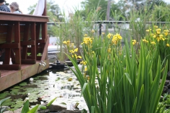 Rooftop Pond Flowers